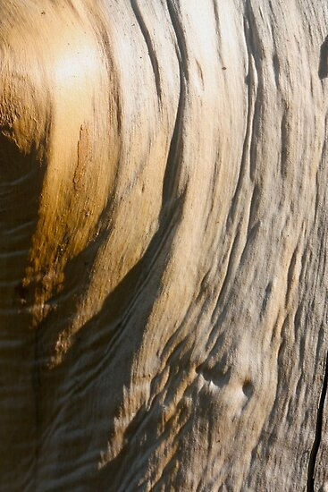 wooden clothe by yvesrossetti
