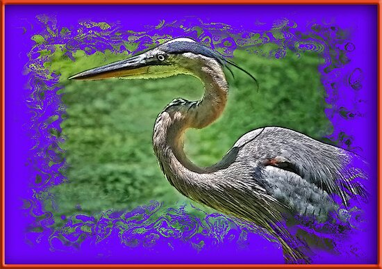 Gray Heron in 3D by George  Link