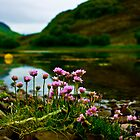 Loch flowers - Kyle Lochalsh by Loren Goldenberg-Kosbab