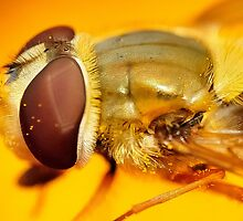 Hoverfly - Upclose and personal by Shehan Fernando
