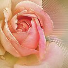 Pink Rose by venny