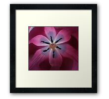 Heart of a Red Tulip Framed Print