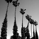 Palms, Del Mar, California by heatherfriedman