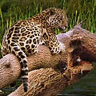 The Jaguar by Colin Metcalf