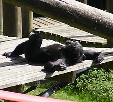 Monkey taking a suntan perhaps?  by roggcar
