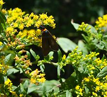 Winged bug on Goldenrod... by Poete100