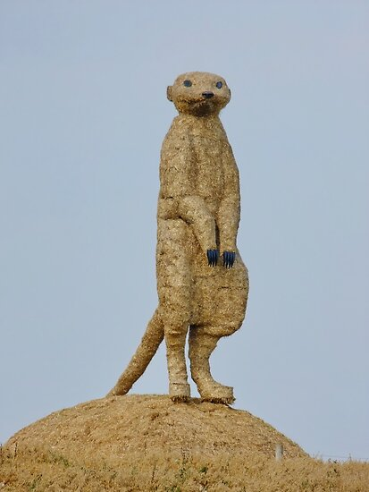 36ft Meerkat by AnnDixon