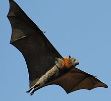 Flying Like a Bat Out of Hell by Richard Shakenovsky