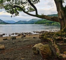 The Old Oak, Ullswater - Cumbria. UK by David Lewins