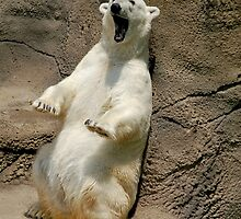Polar Bear stretch by Linda Long