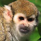Squirrel monkey by DutchLumix