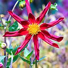 Star flower  by DIANE  FIFIELD