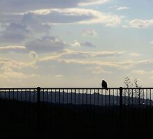 Bird on Railings by Hannah-C