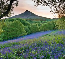 Bluebells - Newton Woods by Northern-Light