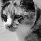 Torti Kitty B&W by cynTEAa