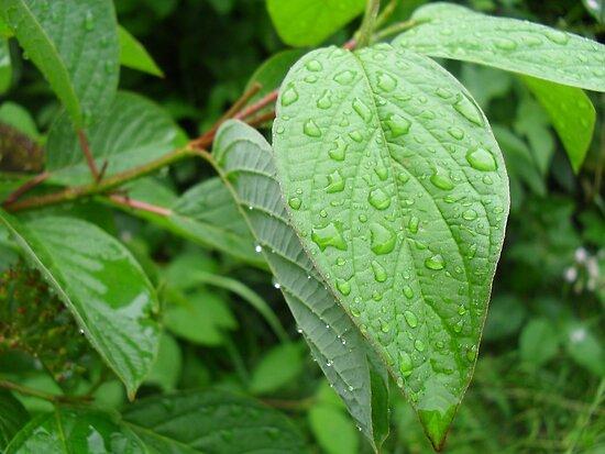 Leaves After Rain by Fury Iowa-Jones