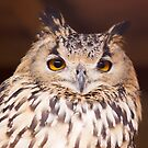 Bit Of A Hoot by Lynne Morris