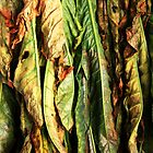 Tobacco Leaves by Timothy Gass