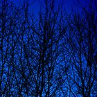 Winter Blues by BWS052