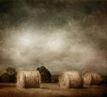 hay rolls on a sunday afternoon by dawne polis