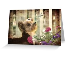 Gracie - Live life to the fullest Greeting Card