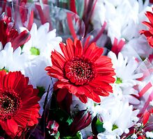 Red Bouquets by phil decocco