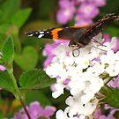 Pollination Series ~ 4 by Kimberly Chadwick