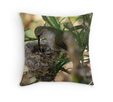 Costa's Hummingbirds  ~ 3 days old ~ 2nd series Throw Pillow