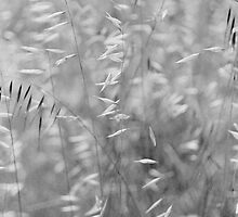 wild oats by Janine Paris