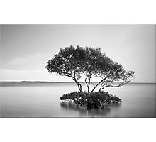 The Mangrove Tree Photographic Print