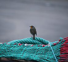 Robin on the fishing nets at Oban by YorkshireMonkey