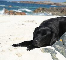 Let sleeping dogs lie..... Cassie! by YorkshireMonkey