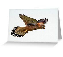 Kestrel Greeting Card