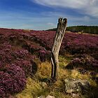 Wintergill Heather by Stewart Laker
