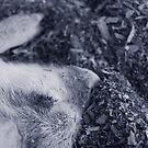 Sleeping Piglet by ericafaye