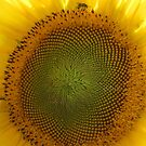 Sunflower with Bee by Misty Lackey
