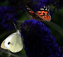 Sharing The Spoils / Painted Lady / Large White by snapdecisions