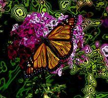 The Monarchy of Butterflies by wiscbackroadz