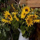 A jugful of sunshine by Jennifer Bradford
