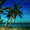 Palm Trees and the Beach in Key West by Susanne Van Hulst