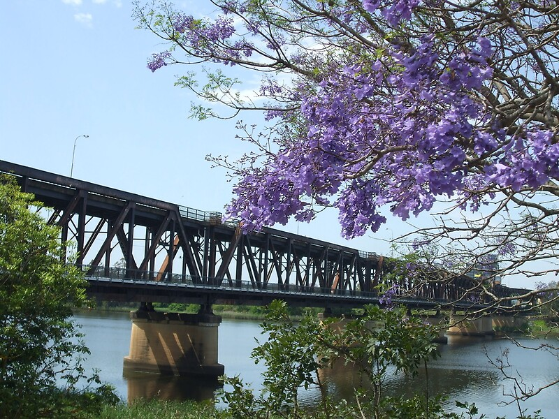 Grafton Australia  city photos gallery : Jacarandah and Grafton Bridge NSW Australia