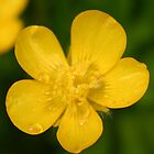 buttercup by Éilis  Finnerty Warren
