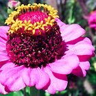 Crowned Zinnia   by Spiiral