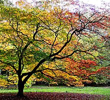 Westonbirt Arboretum, Gloucestershire, UK by buttonpresser