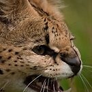 I'm small but tough - Malawi the Serval by JMChown