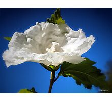 Like A Cloud In The Sky Photographic Print
