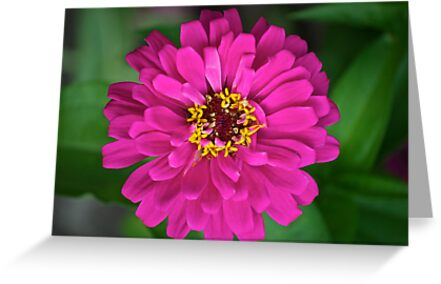 zinnia zen by Mark de Jong