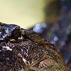 Gator Bokeh by Kirstyshots
