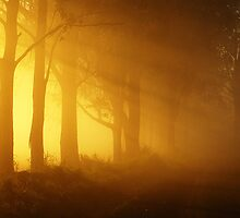 Fog through trees by thatkellychic