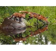 Red Fox Reflections Photographic Print